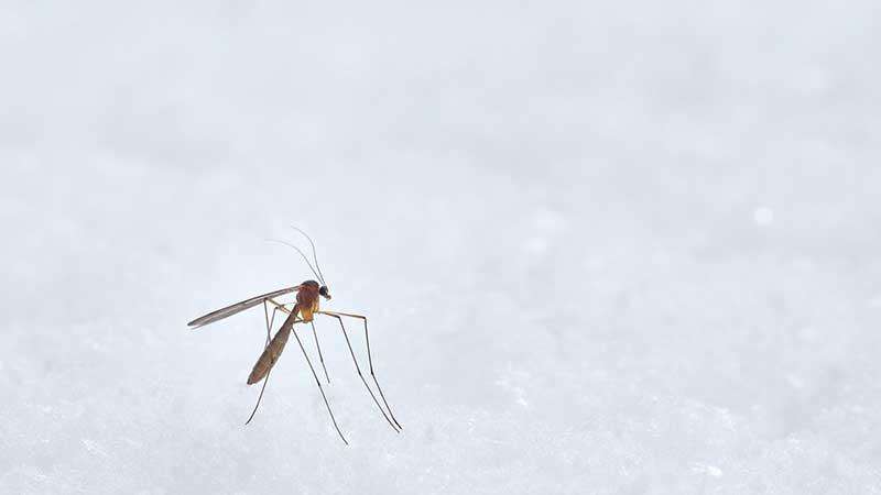 איך לטפל בעור לאחר עקיצת יתוש